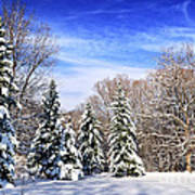 Winter Forest With Snow Poster