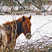 Winter Horse Landscape Poster