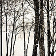 Winter Landscape On Snowy Day Poster