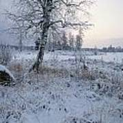 Winter Scene With Snow-covered Grasses Poster