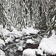 Winter Snow Along Still Creek In Mt Poster by Craig Tuttle