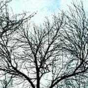 Winter Tree 1 Poster