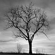 Winter Tree Silhouette Poster