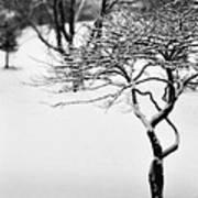 Winter Whisper Poster