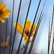 Winter Wildflowers Poster