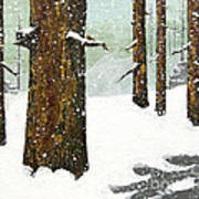 Wintering Pines Poster