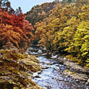 Wissahickon Creek In Fall Poster