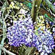 Wisteria And Wagon Wheel Poster