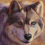 Wolf Study Poster