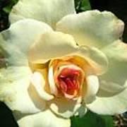 Wonderland Rose Poster