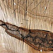 Wood Design Poster