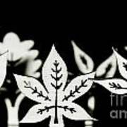 Wooden Leaf Shapes In Black And White Poster