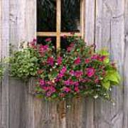 Wooden Shed With A Flower Box Under The Poster by Michael Interisano