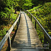 Wooden Walkway Through Forest Poster