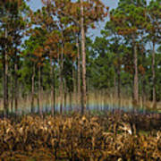 Woodland Rainbow Poster