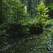 Woodland View With Stream Poster