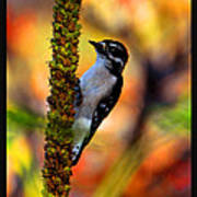 Woodpecker On Mullein Poster