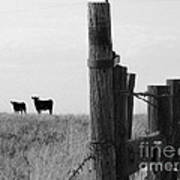 Wyoming Fence Line Poster