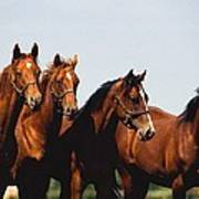 Yearling Thoroughbred Poster