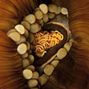 Yellow And Orange Anemone Mouth, Sabah Poster