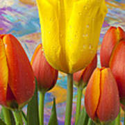 Yellow And Orange Tulips Poster