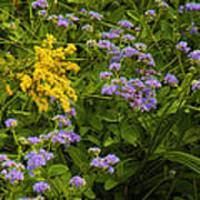 Yellow And Violet Flowers Poster