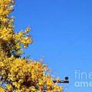 Yellow Autumn Tree Poster