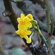 Yellow Beam Poster