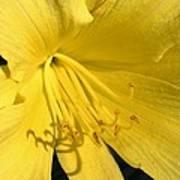 Yellow Beams Poster