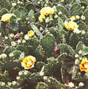Yellow Cactus Poster