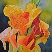 Yellow Canna Poster by Cynthia Sexton