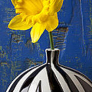 Yellow Daffodil In Striped Vase Poster