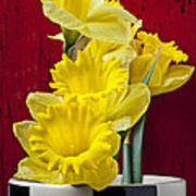 Yellow Daffodils In Checkered Vase Poster