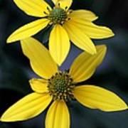 Yellow Duet Poster