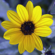Yellow Flower 4 Poster
