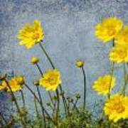 Yellow Flower Blossoms Poster