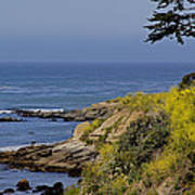 Yellow Flowers On The Central California Coast Poster