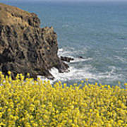 Yellow Flowers On The Northern California Coast Poster