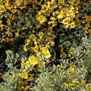 Yellow Flowers On Tree Poster