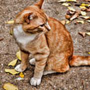 Yellow Kitty Poster