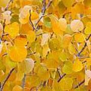 Yellow Leaf Patterns Poster