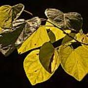 Yellow Leaves On A Tree Branch Poster