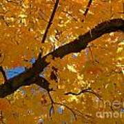 Yellow Maple Branch Poster