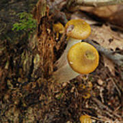 Yellow Mushrooms Poster