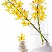 Yellow Orchid Bunchs Poster