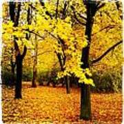 Yellow Park Poster