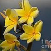 Yellow Pinwheels Poster
