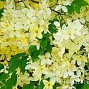 Yellow Shower Tree - 1 Poster