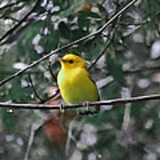 Yellow Songbird Poster