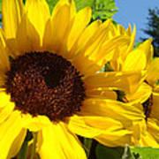 Yellow Sunflowers Art Prints Summer Sunflower Poster